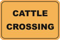 cattle, cattle crossing