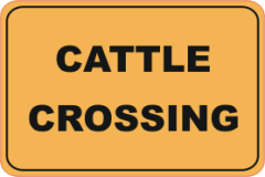 cattle, cattle crossing
