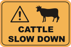 warning cattle ahead, cattle, cattle on road