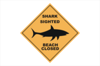 shark sighted beach closed