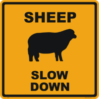 Sheep Slow Down